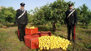 limoni-furto